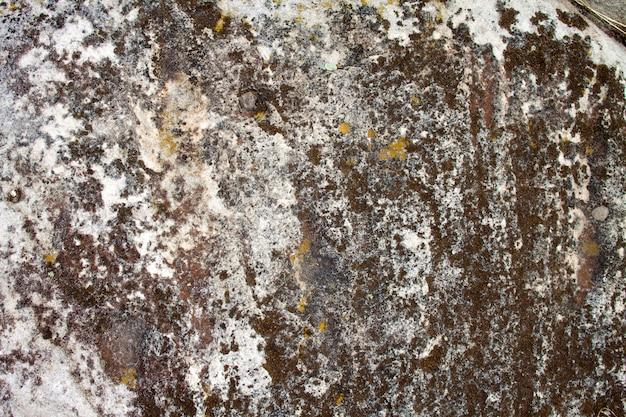 Superfície de pedra com líquen. textura natural
