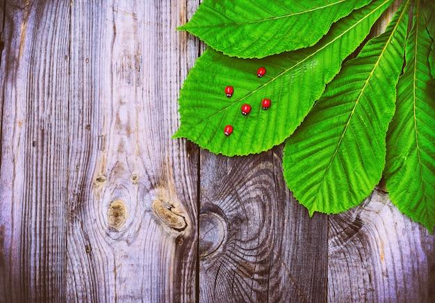 Superfície de superfície de madeira cinza vintage com uma folha de castanha
