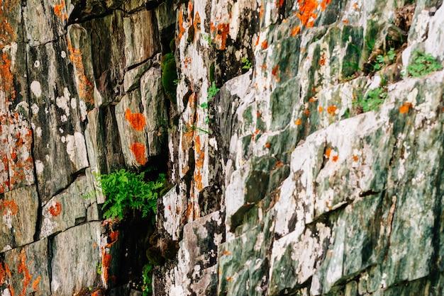 Superfície em camadas rochosa laranja musgosa da montanha com rica vegetação das terras altas.
