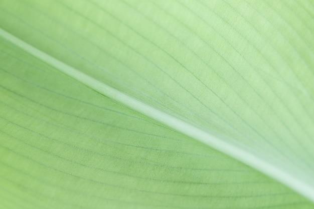 Superfície natural da estrutura da folha verde