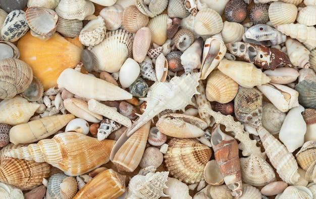 Superfície natural de verão de conchas