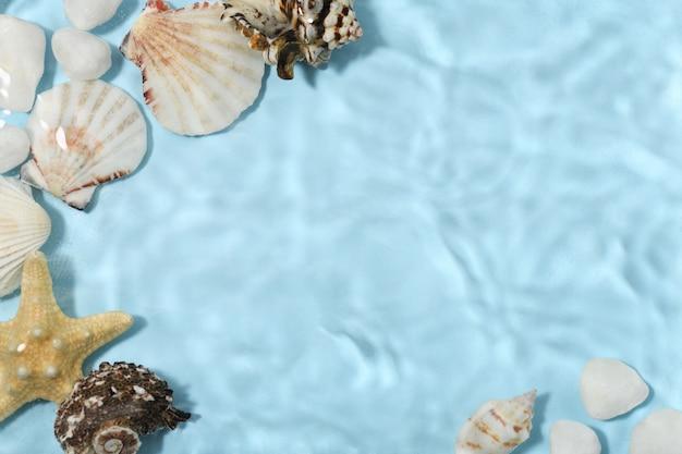 Superfície subaquática com conchas do mar