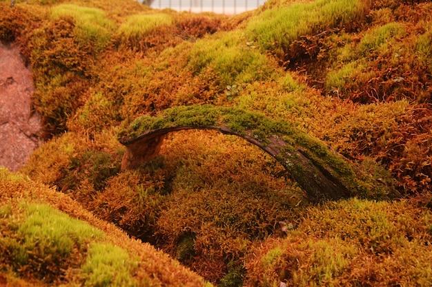 Superfície verde coberta de musgo em um jardim de flores