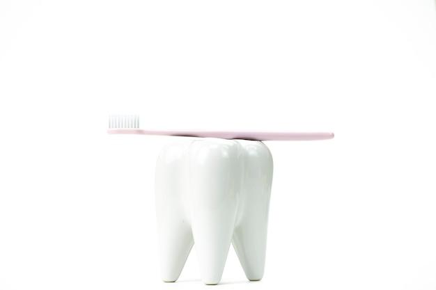 Suporte de escova de dentes em forma de dente molar primário com escova de dentes