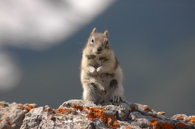 Suportes de esquilo fofos