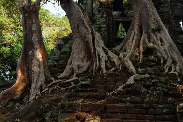Ta prohm famosa selva árvore raízes abraçando templos de angkor, vingança da natureza contra edifícios humanos, destino de viagem camboja.