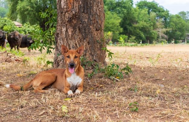 Tailandês cachorro marrom sentado debaixo da árvore