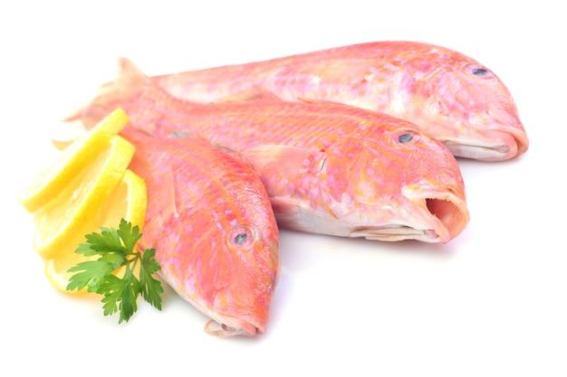 Tainha de peixe