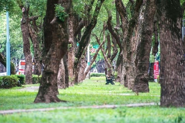 Taipei, taiwan - 18 de junho de 2018: park, uma cadeira no parque, relaxante, banyan trees em dunhua road, taipei. sentindo-se calmo