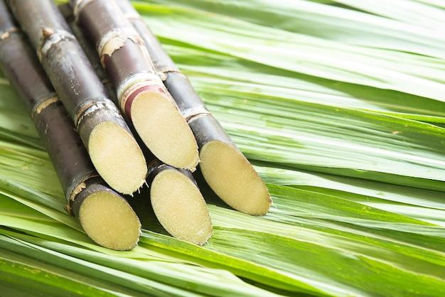 Talos de cana preparados para a produção de suco
