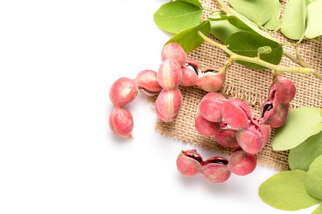 Tamarindo manila ou pithecellobium dulce isolado no branco