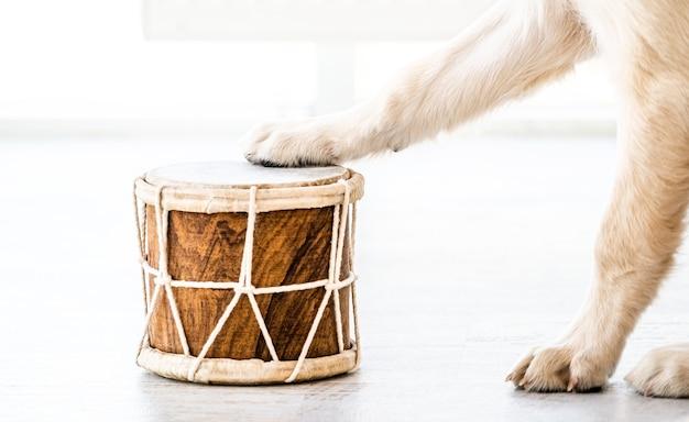 Tambor com patas de cachorro