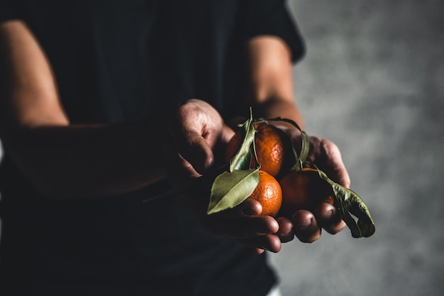 Tangerinas de laranja doce suculentas maduras em uma mão humana contra um fundo escuro. pnov2019