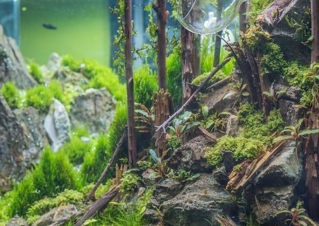 Tanque do aquário com uma variedade de plantas aquáticas.