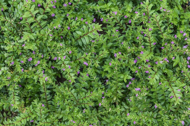 Tapete de plantas com flores naturais, grama com folhas pequenas.