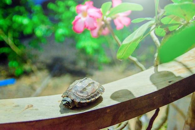 Tartaruga bebê