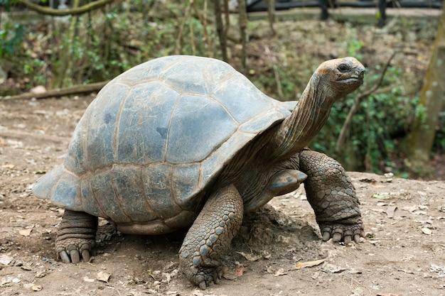 Tartaruga de galápagos em uma reserva natural