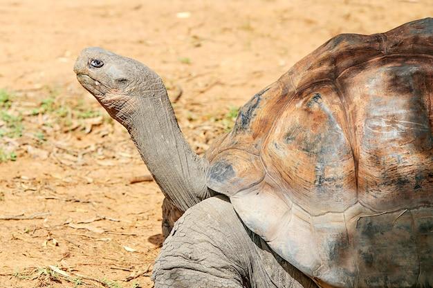 Tartaruga de galápagos