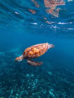 Tartaruga debaixo d'água