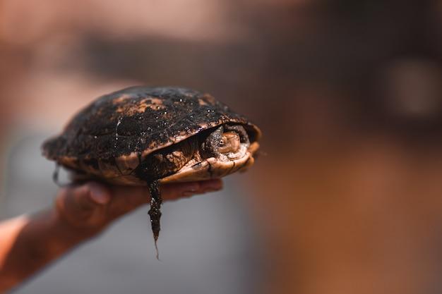 Tartaruga em uma mão com fundo desfocado