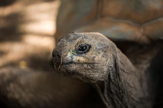 Tartaruga enorme closeup