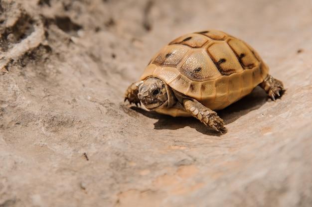 Tartaruga muito pequena rasteja na areia