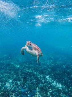 Tartaruga na água