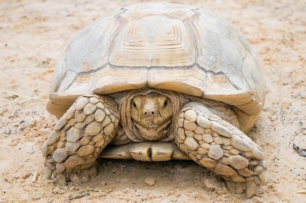 Tartaruga na areia