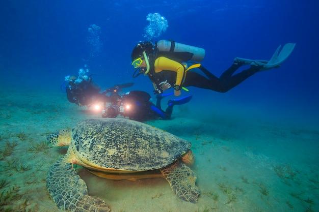 Tartarugas incríveis do mar vermelho de abu dabbab no egito