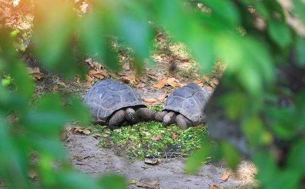 Tartarugas no zoológico