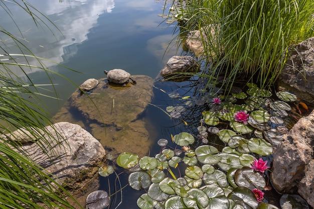 Tartarugas redeared slider no parque paisagístico de aivazovsky park paradise partenit crimea
