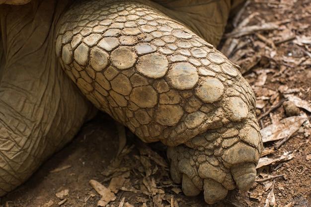 Tartarugas terrestres