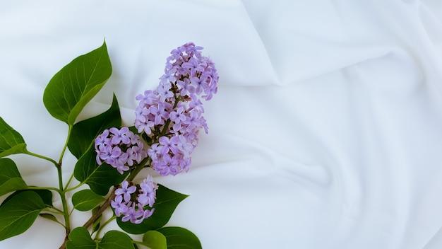 Tecido de cetim branco como pano de fundo. flores lilás em um fundo branco.