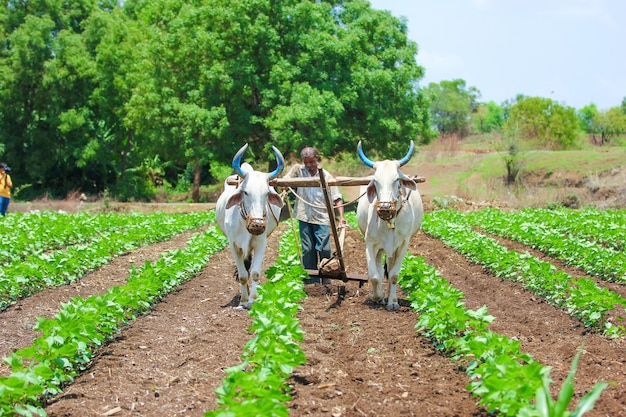 Técnica de agricultura indiana