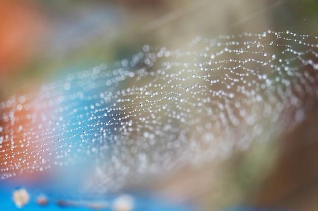 Teia de aranha abstrata turva natural com gota de chuva na linha contra o fundo do sol