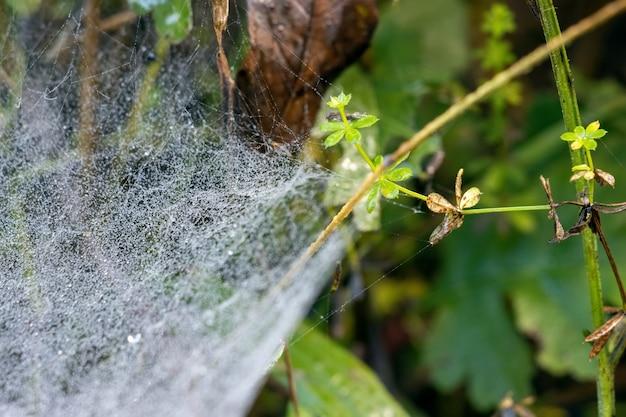 Teia de aranha brilhando com gotas de água do orvalho