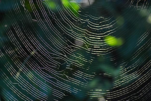 Teia de aranha com fundo verde da natureza
