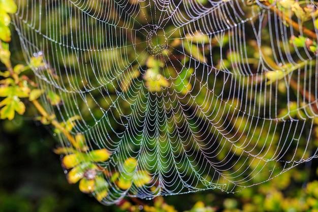 Teia de aranha com gotas de orvalho contra plantas verdes. fundo abstrato