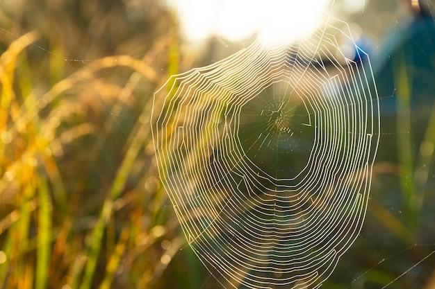 Teia de aranha com gotas de orvalho, ferida por uma manhã nublada e fria. foco seletivo.