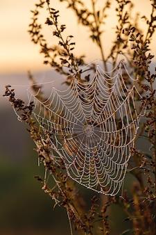 Teia de aranha com orvalho da manhã ao amanhecer