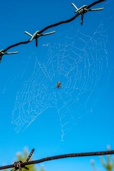 Teia de aranha em arame farpado no céu azul claro