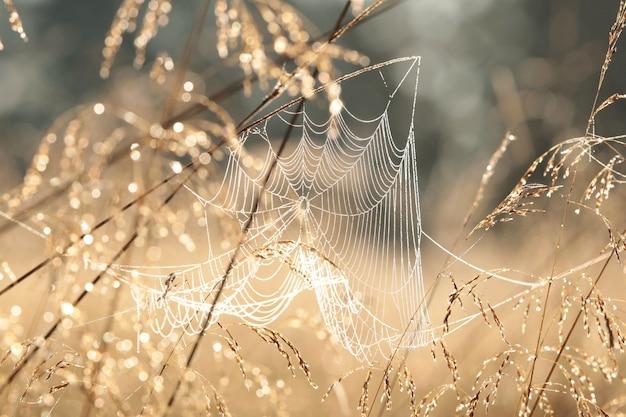 Teia de aranha em um prado durante o nascer do sol