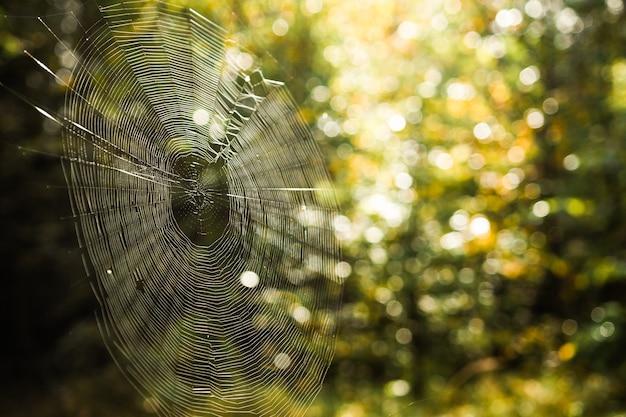 Teia de aranha em uma floresta perto de uma teia de aranha em um fundo verde borrado Foto Premium