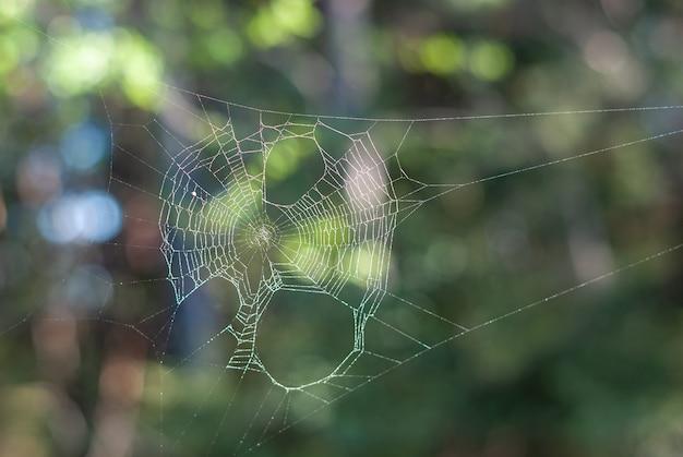 Teia de aranha na floresta em dia de verão com fundo colorido bokeh