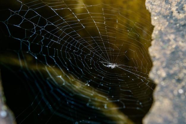 Teia de aranha na natureza