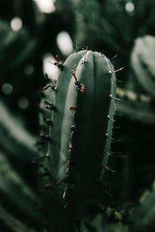 Teia de aranha na planta do cacto