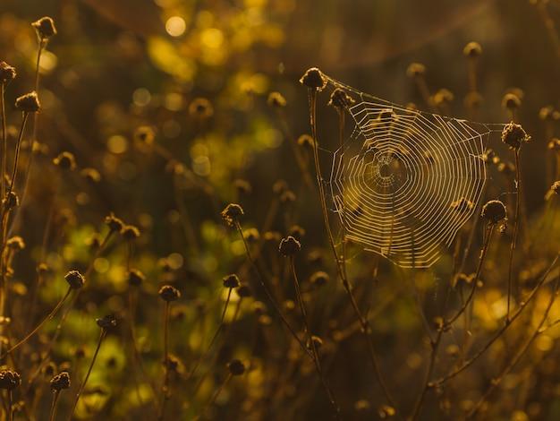 Teia de aranha nas plantas com fundo desfocado