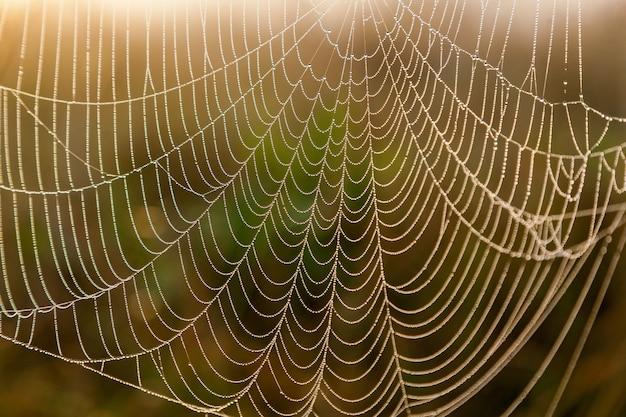 Teia de aranha no fundo do close up do sol e da grama do campo teia de aranha Foto Premium