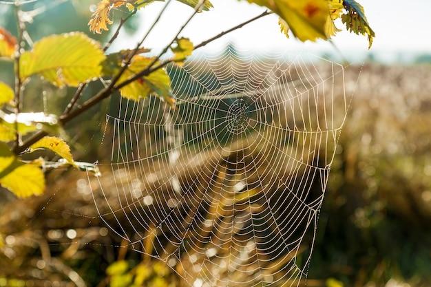 Teia de aranha no fundo do sol e close up da grama do campo