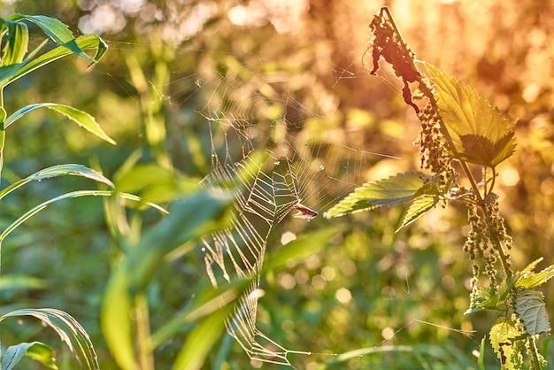 Teia de aranha no sol da manhã teias de aranha no fundo do sol e da grama